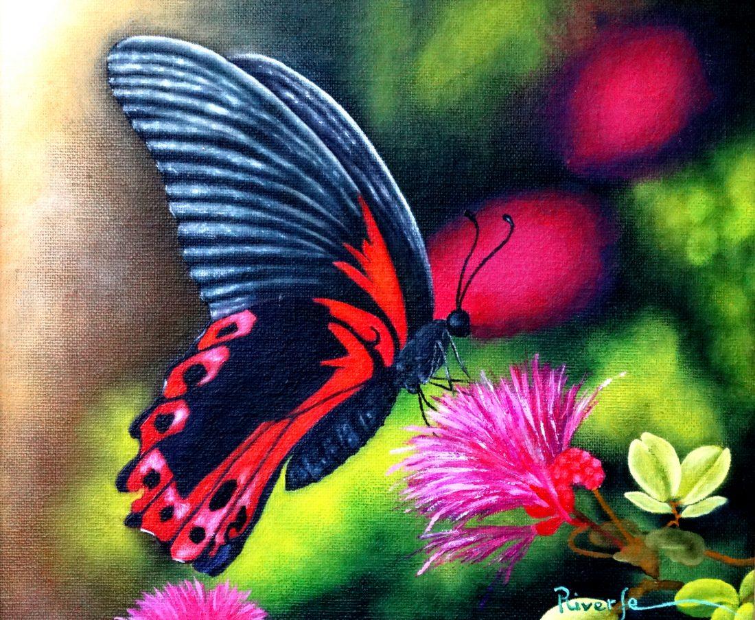 Luz de Mariposa