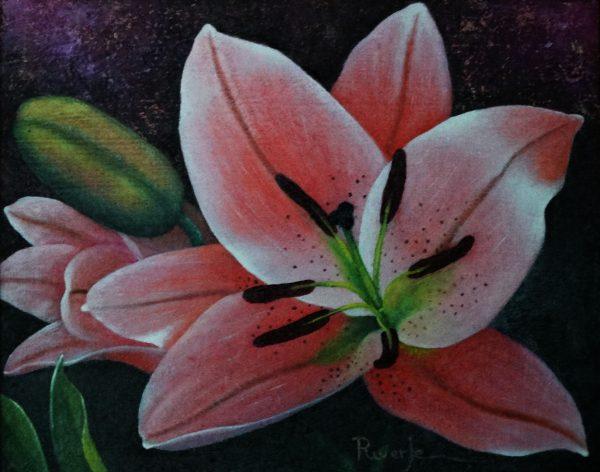 Lilium-rosa